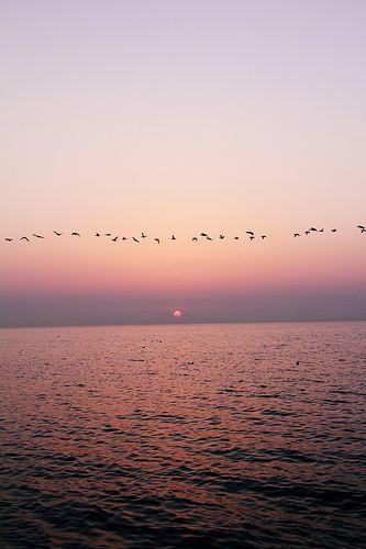 following the horizon