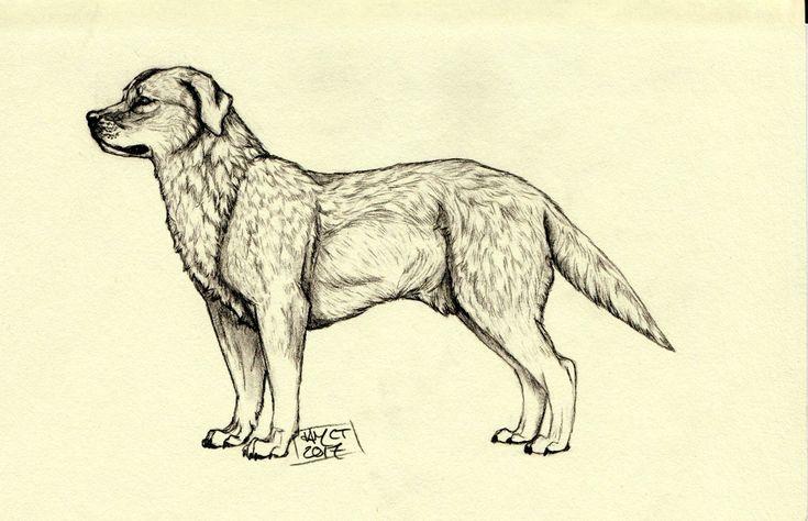 """Labrador"" 2017, by  @itscheesetoasties on Instagram"