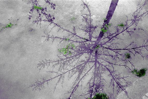 Purple Rain Print.  Nature photography, purple, tree reflection, decor, wall art, artwork, large format photo.