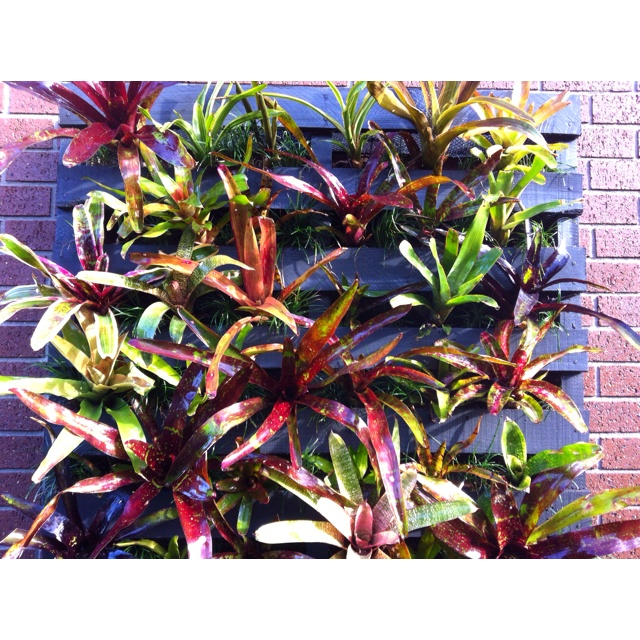 My Diy Bromeliad Vertical Garden Wall Made From An Old