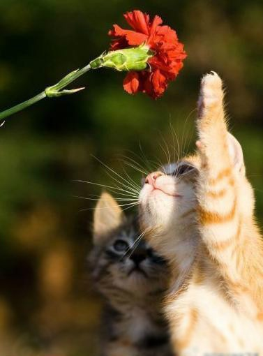 higher!!: Cute Baby, Meow, Cute Cats, Funnies Photo, Cute Pet, Flower Power, Baby Cats, Cute Kittens, Animal