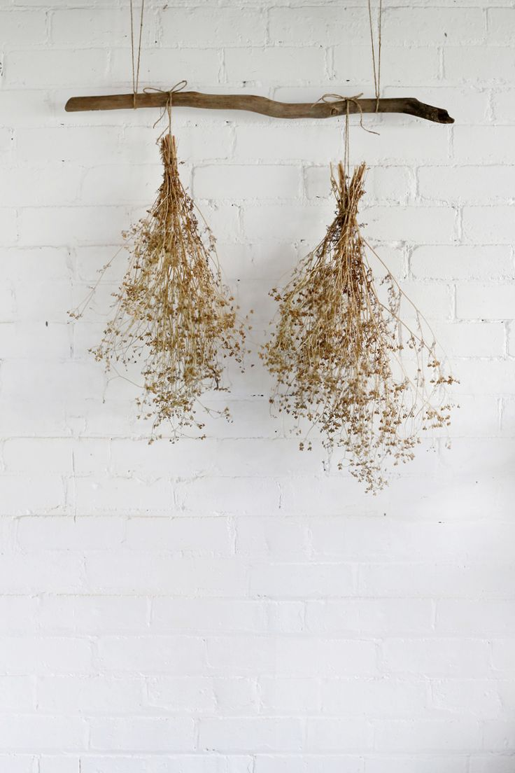 Wall decor of dried bouquets hanging from a branch |The Slowpoke | Harvesting Coriander Seeds