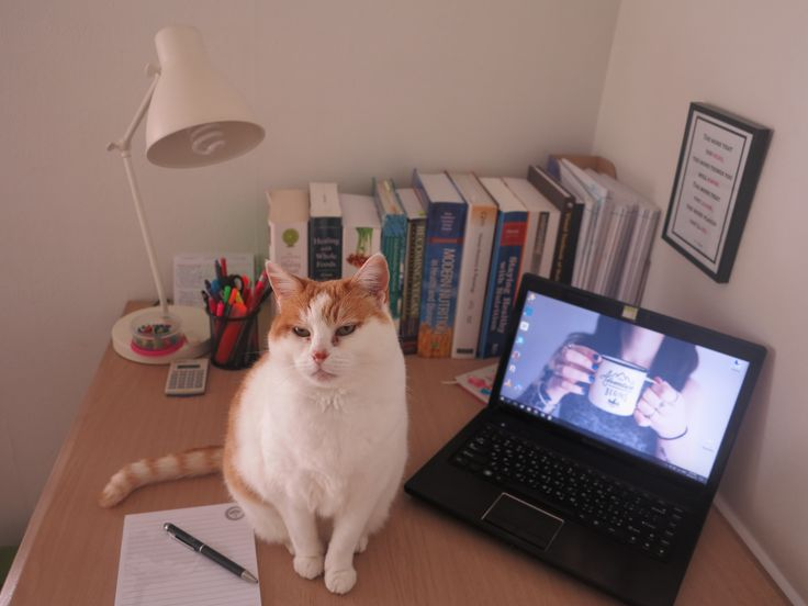 """""""My current desk cannot accommodate all my study materials as well as my furry friend. My cat prefers playing with papers over any toy, sitting on books over the fluffiest blanket, and loves the warmth of computers..."""""""