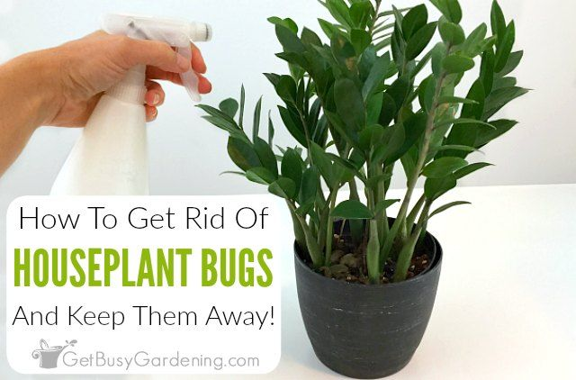 How To Get Rid Of Bugs On Houseplants Plant Pests Plants House Plant Care