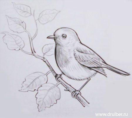 Как нарисовать Птичку карандашом поэтапно