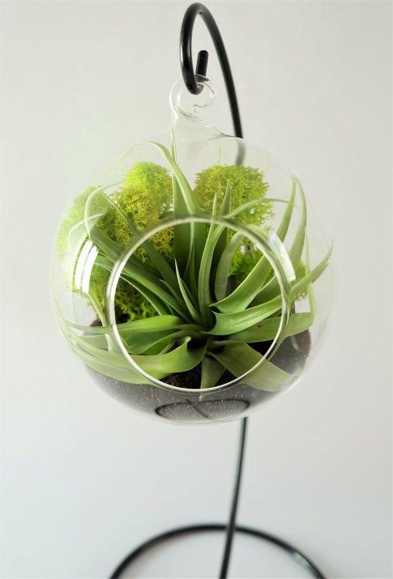 Airplant terrarium with Brachycaulos Abdita  by AlvinaDecco