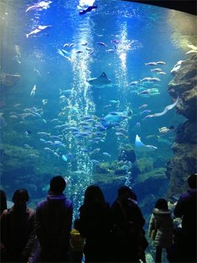 オオサンショウウオに会いに京都水族館へ。見せ方、並べ方、人の迎え方なにもかも上質です。海のない京都市に、本当の海を持ってきたような…「ああ、これが京都のチカラなんだな」と思います。何度も行きたい。【BRUTUS編集長 西田善太】    http://lexus.jp/cp/10editors/contents/brutus/index.html    ※掲載写真の権利及び管理責任は各編集部にあります。LEXUS pinterestに投稿されたコメントは、LEXUSの基準により取り下げる場合があります。