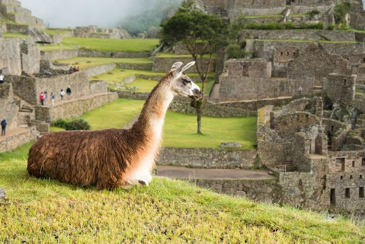 26 of the Top Things to do in Peru