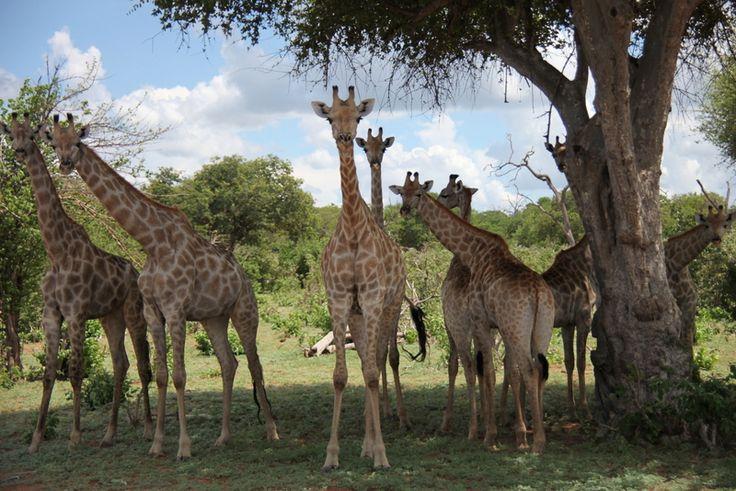 5 советов тем, кто собирается на африканское сафари