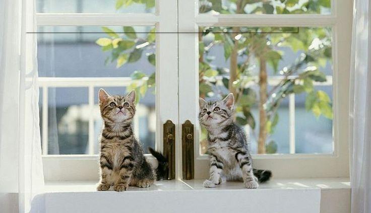 Katjes bij geschilderd kunststof kozijn