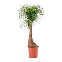 Växter ger grönska och färg åt hemmet - IKEA