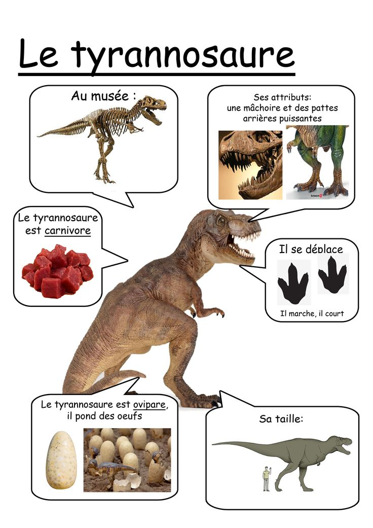 Fiche T-rex                                                       …