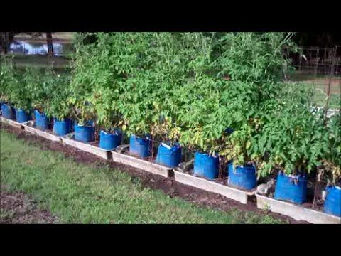 Best Of Larry Hall Grow Bag
