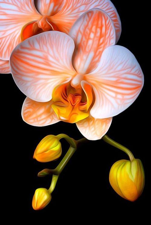 Orange White Yellow Orchids on Black Background