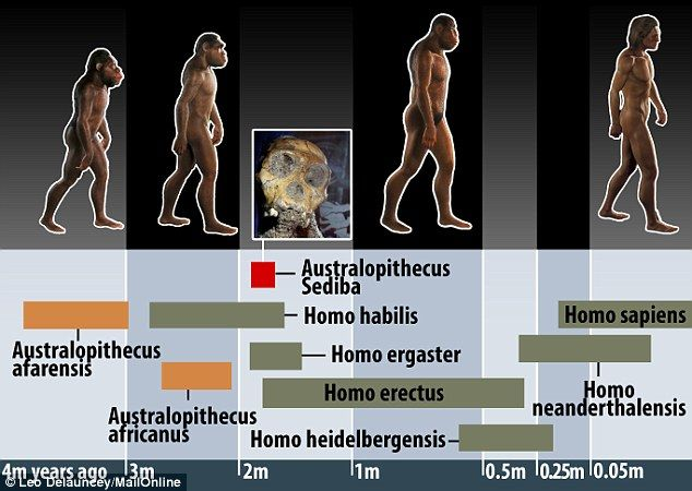 Australopithecus sediba is thought to have lived in South Africa around 1.9 million to 2 million years ago at around the same time as other early humans were evolving across the African continent