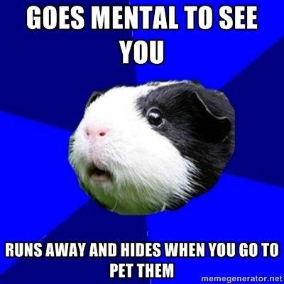 Joy Guinea Pig Jokes? (CLEAN please!)
