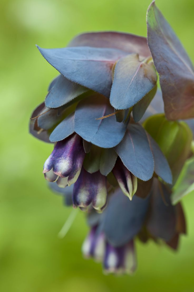 Flowers that bloom in winter months - 9 Lovely Plants That Still Bloom In The Chilly Winter Months