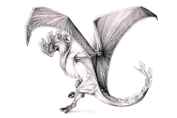excellent-pencil-drawings-of-dragon-4