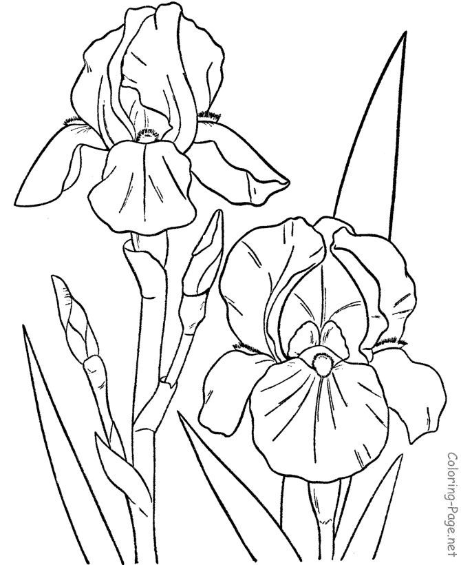 126 best Coloring pages Flowers images on Pinterest   Print coloring ...