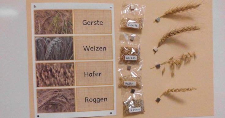 Mit Getreide beschäftigten wir uns ja über eine …