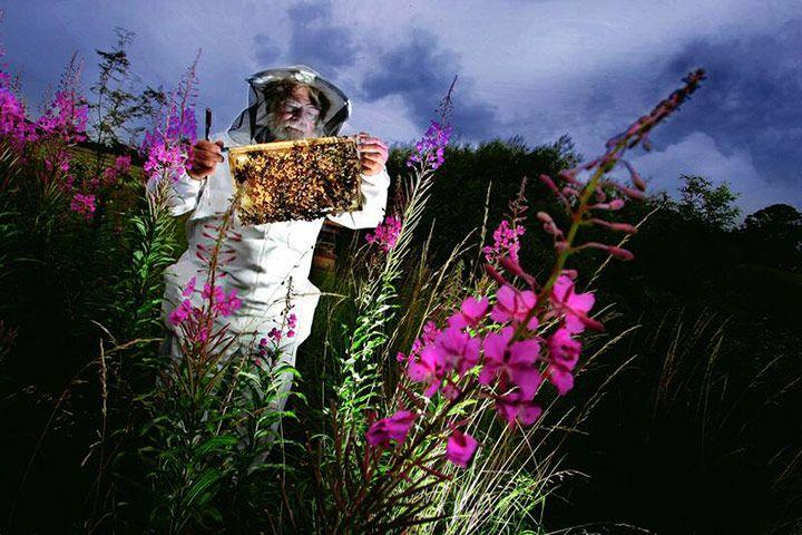 Beekeeping, North Yorkshire, England by Stephen Garnett