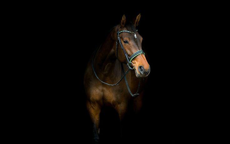 конь, фон, лошадь
