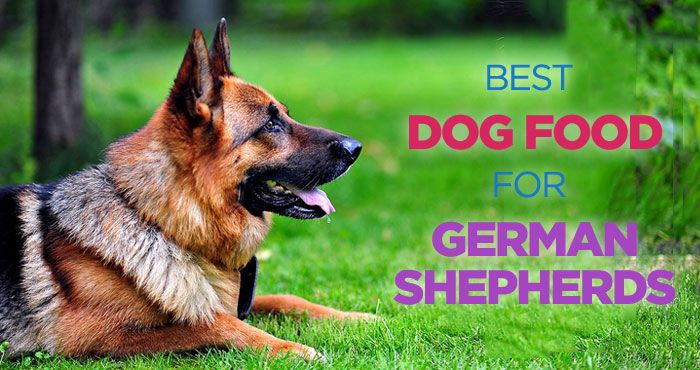Looking for best dog food for German Shepherds? Here we have 4 high-quality dog foods that will keep your dog sharp and healthy. Feeding a balanced healthy food will not only improve quality of your dog's life but also increase the lifespan. See more guides to your dogs health, nutrition, training and behavioral problems on PeanutPaws.com