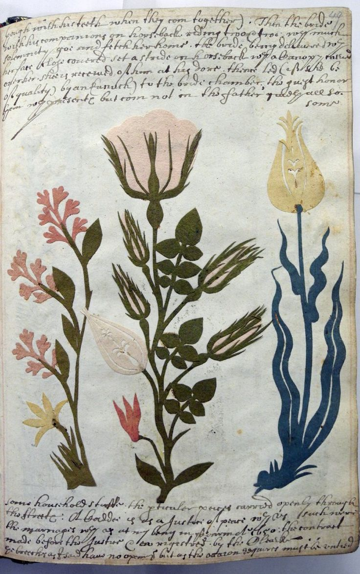 Folio 49r. Album leaf  paper cut-outs. Three cut-out flowers:  cyclamen and lilac on the left; pink roses and tulip in centre; tulip on the right.