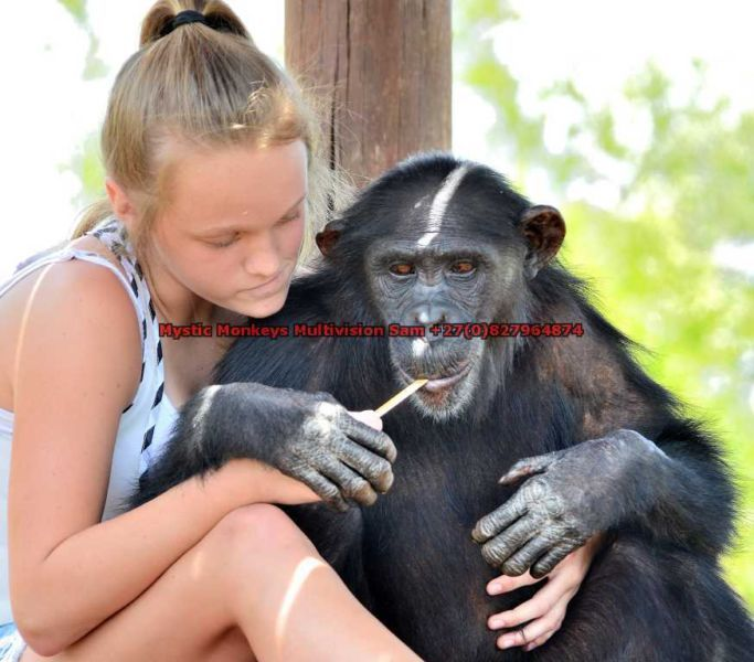 Professional Photographer inclusive of Photo shoots with wild Animals | Centurion | Gumtree South Africa