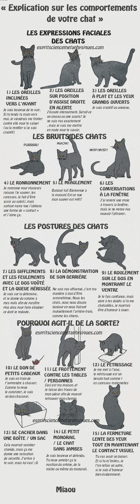 Comment comprendre ce que votre chat essaie de dire « Explication sur les comportements de votre chat »Les humains ont vraiment de la chance. Nous avons la