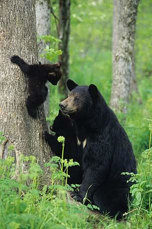 Climbing leasson - Mama bear and baby bear