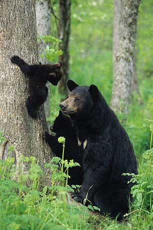 Climbing leasson - Mama bear and baby bear