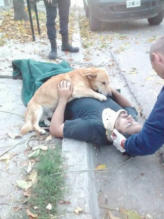 Concerned Dog Refuses To leave His Dad's Side After He Is Injured In A Fall - http://www.sunnyskyz.com/good-news/2214/Concerned-Dog-Refuses-To-Stop-Hugging-His-Owner-Who-Was-Injured-In-A-Fall