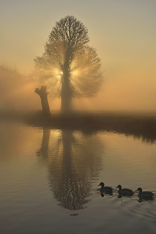 Boating Lake, Bushy Park, England, by Kasia Nowak.