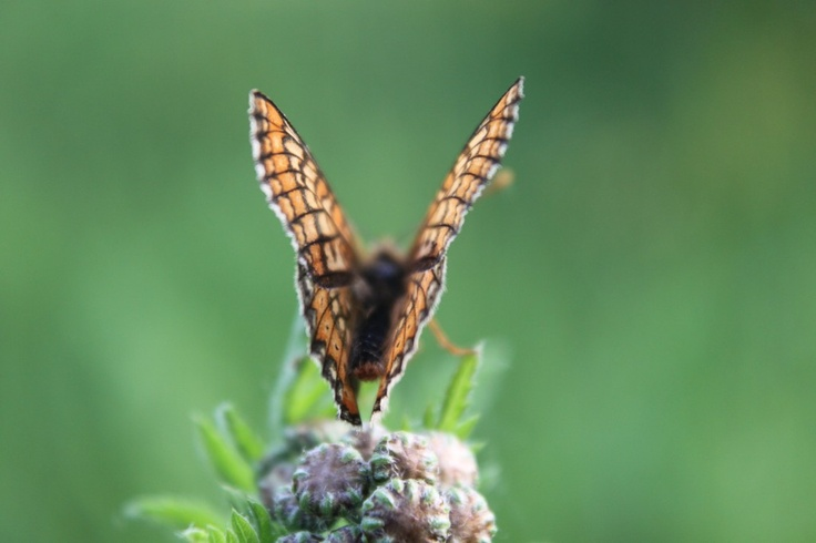 Butterfly with Open Wings on Green Plant - Public Domain Photos, Free Images for Commercial Use