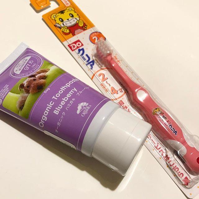 引越しでバタバタしてて歯磨きしてあげれてなくて一ヶ月振りくらいの歯磨き 歯磨き粉は伊勢丹のペットグッツ売り場で買ったオーガニックの歯磨き粉を使うようにしてます 歯周病などで抜歯をしなくてはならない状況を避けるために 3日に1回の歯磨きを心掛けたいです^^ ##チワプー  #チワワ  #トイプードル#chihuahua#小型犬#mix犬#dog#dogs#cute#love#lovely#family#animals#animal #insta#instabeauty#instagood#instalike#instalove#instalovers#instalook#instamood#pic#photo#pretty#instadog#愛犬#愛犬家#レオン