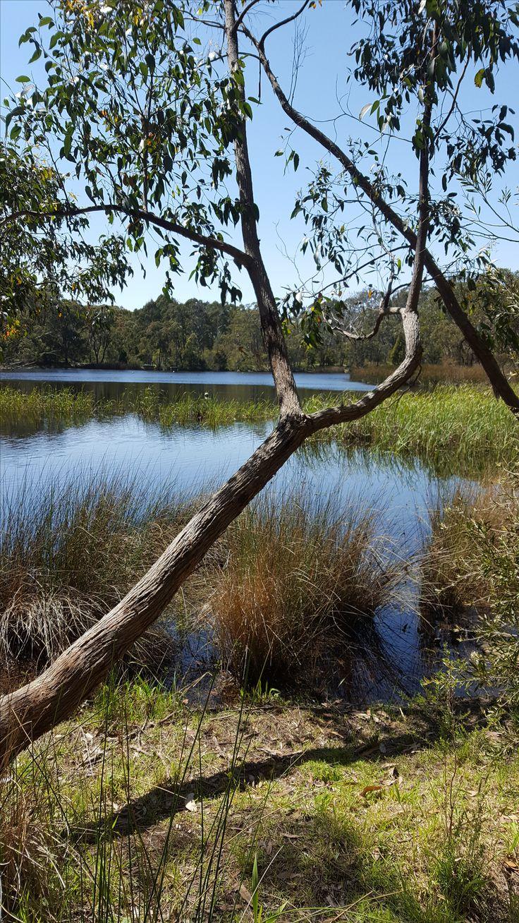 Woorabinda wetlands. Adelaide Hills.