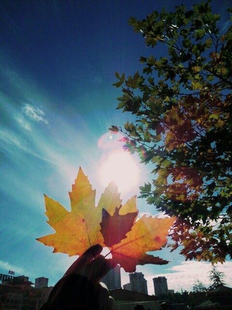~Sonbahar bitiyor~
