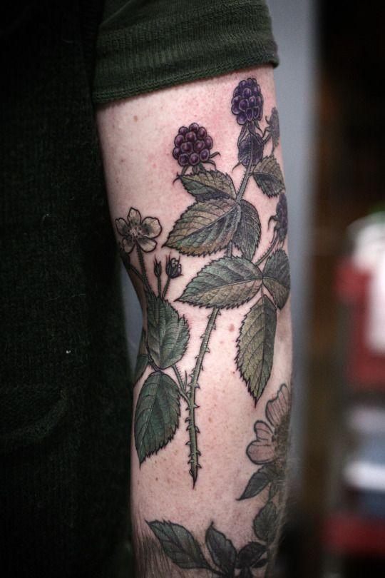 blackberry botanical illustration by alice carrier at wonderland tattoo in portland, oregon  http://alicecarrier.tumblr.com