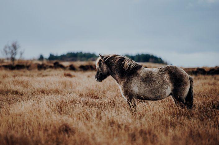 Fotos Pferde In Der Natur I In 2020 Pferde Fotografie Schone Pferde Pferde