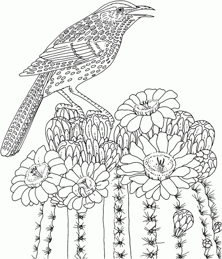 Cactus Wren And Saguaro Blossom Arizona State Bird Flower Coloring Page From Category Select 20946 Printable Crafts Of Cartoons Nature