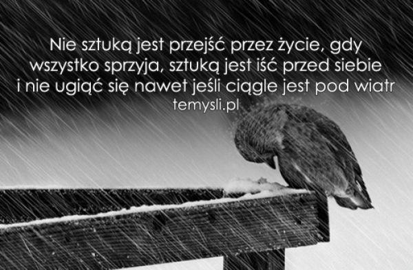 TeMysli.pl - Inspirujące myśli, cytaty, demotywatory, teksty ...