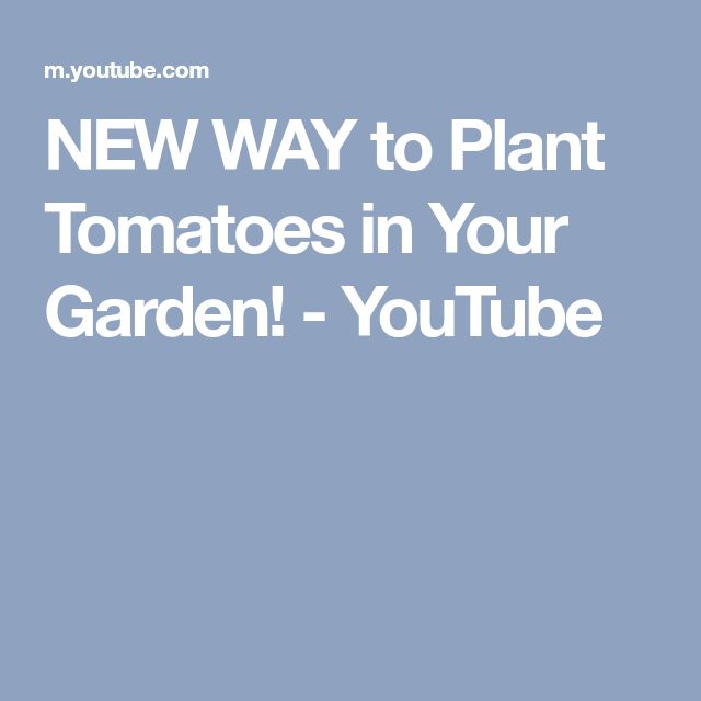 NEW WAY to Plant Tomatoes in Your Garden! - YouTube
