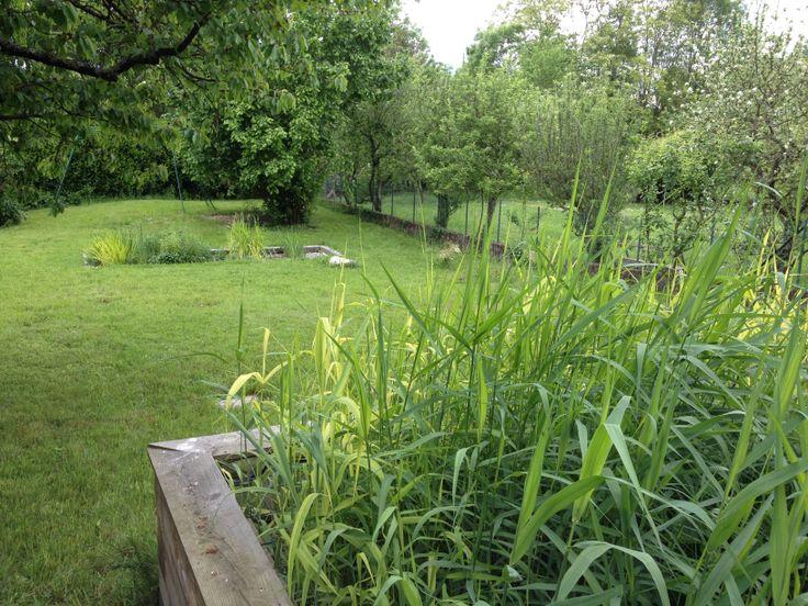 10 best garden phytoepuration images on Pinterest Garden, Garten - assainissement d une maison