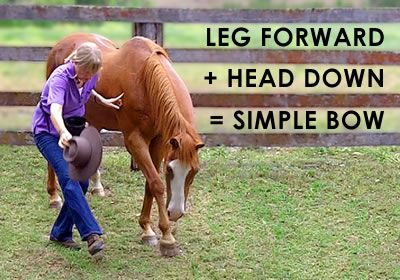 Most tricks, even the complicated ones, start with a simple trick or are made up of several simple tricks joined together. So start byteaching yourhorsethese 10 super simple tricks and then use…