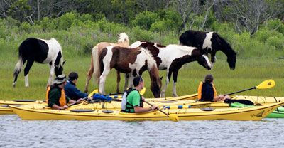 kayak along Assateague's back waters where wild ponies & other wildlife live.