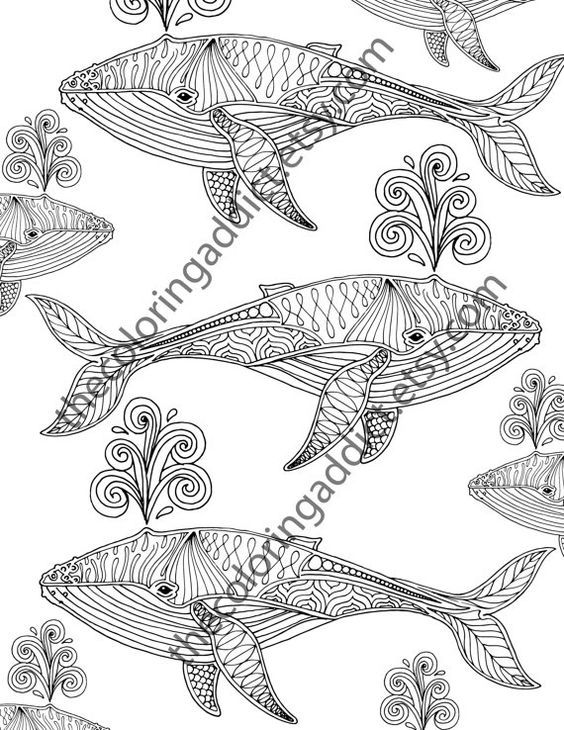 26 best color me zen ocean images on pinterest for Adult coloring pages nautical