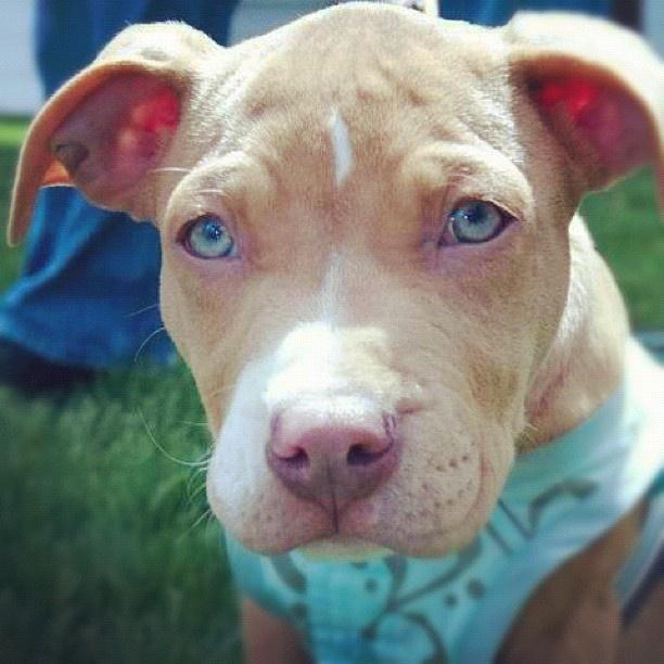 Girl Dog Names Blue Pitbulls