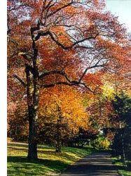 Lemoyne Owen College has an arboretum that is certified by TUFC