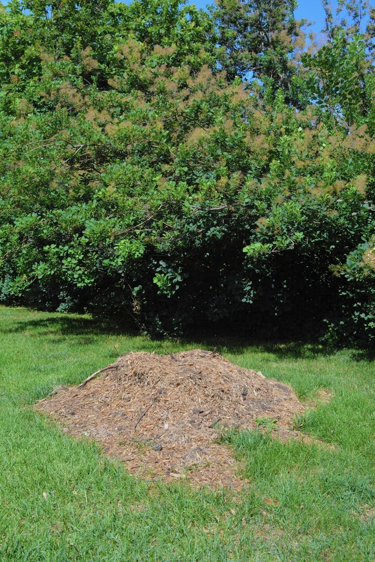 Tree borers amp bark beetles arborx tree health care - A New Tree Planted In The Same Spot Needs Special Care To Thrive